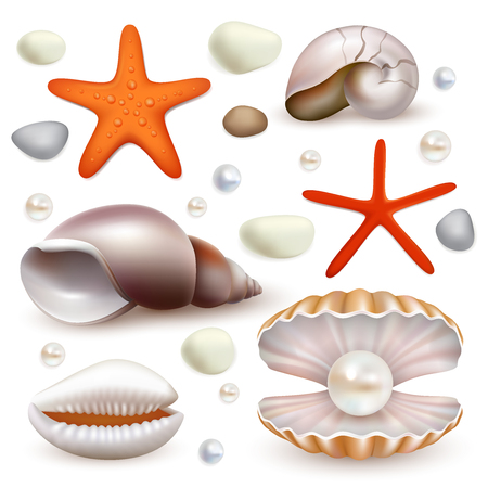 Vector set of realistic seashell and starfish icons isolated. Beautiful marine molluscan seashells and pearl shell.
