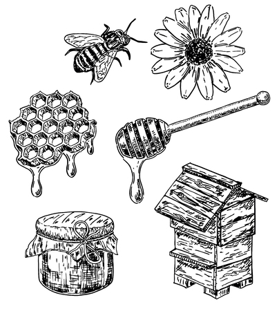 Vector ink hand drawn sketch style honey set Vettoriali