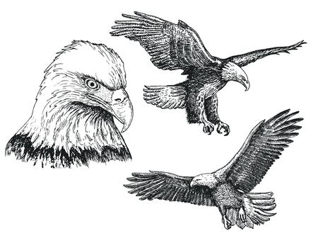 Eagle bird sketch icon set