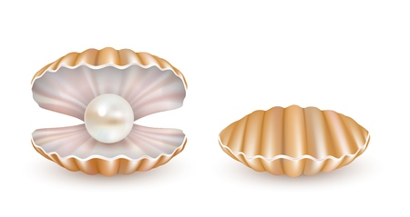 Vektor schöne Perle Shell Icon Set Standard-Bild - 101025521