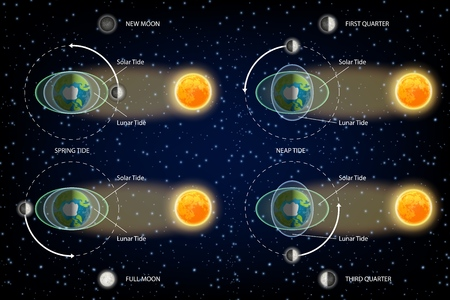 Lunar and Solar tides diagram. Vector illustration. Educational poster, scientific infographic, presentation template.