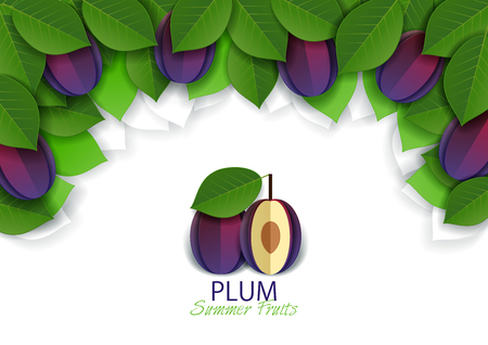 Ripe fresh plum fruit background, frame. Vector paper art illustration. Packaging label design template.