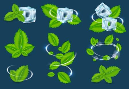 Set di foglie di piante organiche di menta fresca vettoriale