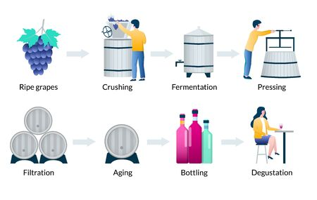 Steps of wine production process, vector infographics