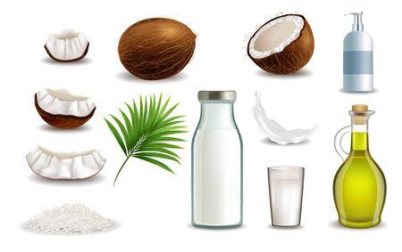 Realistic coconut fruit, vector isolated illustration on white Stock Illustratie