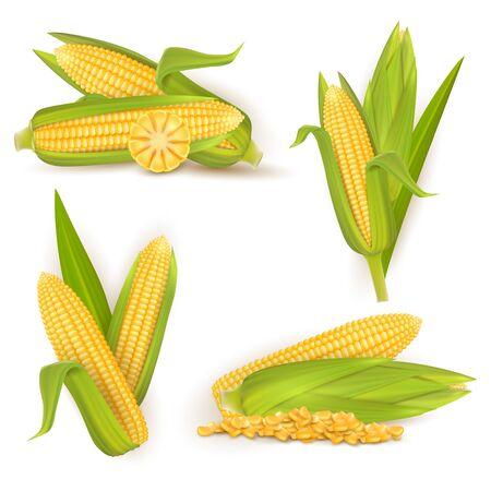 Realistic sweet corn set, vector isolated illustration