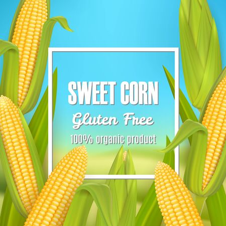 Sweet corn vector poster, label, sticker template