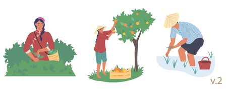 Asian farmer male and female character set, vector flat isolated illustration. People planting rice seedlings, picking tea leaves and fruit. Asian agriculture, rice farming, gardening, tea production.