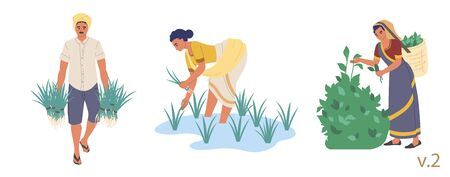 Indian farmer male and female character set, vector flat isolated illustration. People planting rice seedlings and picking tea leaves. Indian farming industry. 向量圖像