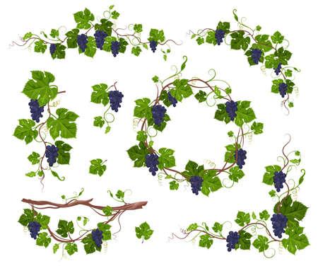 Grapevine climbing plant with purple grapes set, flat vector isolated illustration. Grape vine creeper.