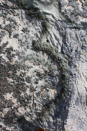 blackly: On a grey stone blackly-grey  moss grows by a number 3  Stock Photo