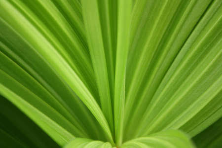 pleated: Green pleated sheet of a plant
