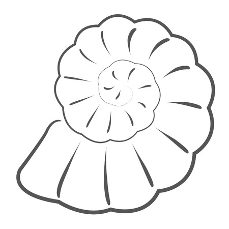 sketched seashell design template for label banner or card raster illustration stock