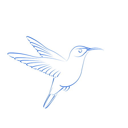 pollination: Sketched hummingbird colibri isolated on white background. Design template for label, postcard or logo. Vector. Illustration