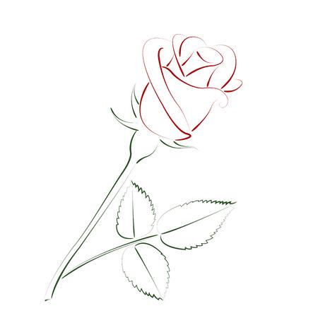 아름다운 스케치 로즈는 흰색 배경에 고립입니다. 라벨, 엽서 또는 로고 디자인 템플릿입니다. 벡터.
