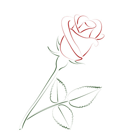 buds: Beautiful sketched rose isolated on white background. Design template for label, postcard or logo. Vector.