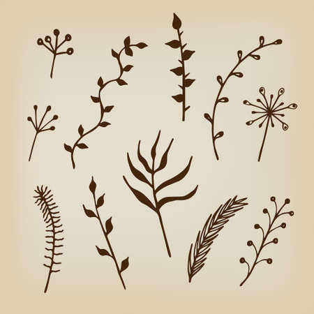 twigs: Hand drawn floral ornaments. Herbs and twigs for spring and summer design. Vintage labels. Vector. Illustration