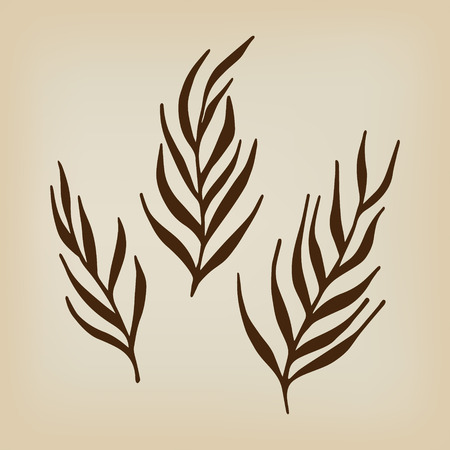 herbs: Herbs and twigs for spring and summer design. Vintage labels. Vector. Illustration