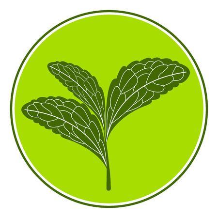 sweetener: Stevia tempate isolated on white background. Stevia leaves on a stem.
