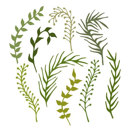 algas marinas: Conjunto de dibujados a mano ramas, plantas y algas marinas aisladas sobre fondo blanco. Ilustración del vector.