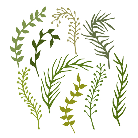 Set of hand-drawn branches, plants and seaweed isolated on white background. Vector illustration.