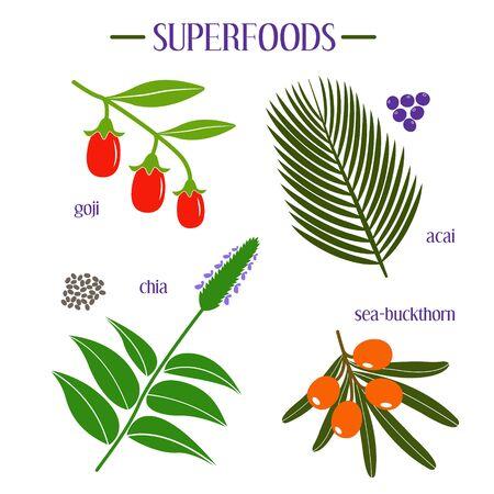 acai: Set of superfood. Goji, acai, chia and sea-buckthorn vector illustrations.
