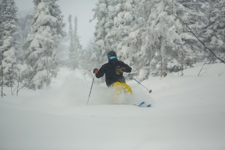 descend: Skier rides. Descend from the mountains, in the winter a lot of snow on the pines and fur-trees