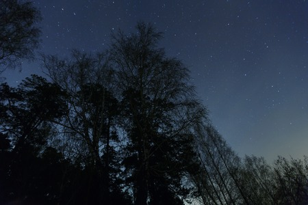 a beautiful night sky, the Milky Way and the trees. Banco de Imagens