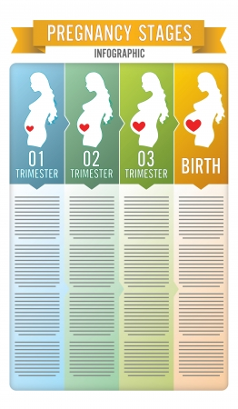 Pregnancy stages. Vector illustration. Vector