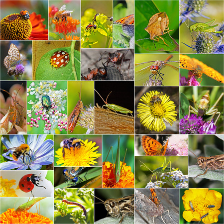 siberia: Insects. A collage of photos of insects found in Siberia