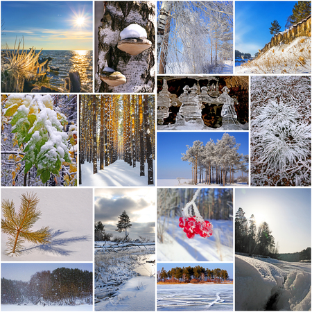 winter photos: Winter in nature, Siberia, Novosibirsk oblast, Russia. A collage of photos Stock Photo