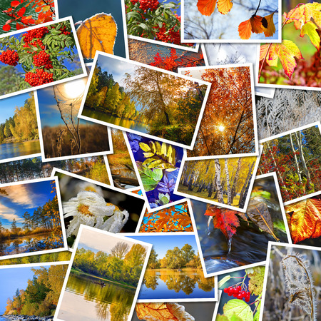 defoliation: Autumn in nature, Siberia, Novosibirsk oblast, Russia. A collage of photos Stock Photo