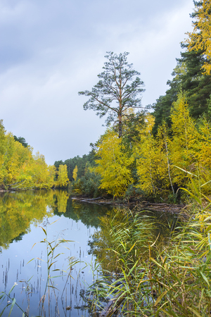 desolated: Autumn forest by the river. The river Separate, Novosibirsk oblast, Siberia, Russia