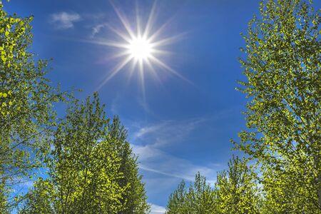 The bright spring sun over birch grove. Solar landscape