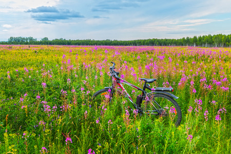 Novosibirsk oblast, Siberia, Russia - July 10, 2017: a Bicycle among wildflowers in a meadow in the wild Editorial