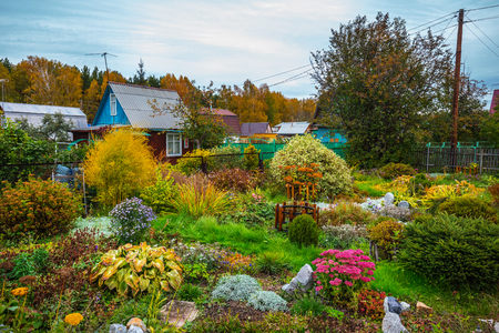 A suburban area with a flower garden in the fall. The end of September, Siberia, Russia