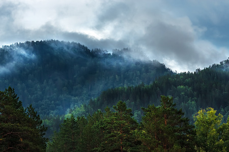 Fog formed on the mountain tops covered with dark coniferous taiga. Altai mountains, Katun river region, southern Siberia, Russia 免版税图像