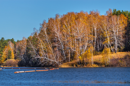 Autumn landscape on a small Siberian river. Razdelnaya river, Berdsk, Novosibirsk region, Western Siberia, Russia