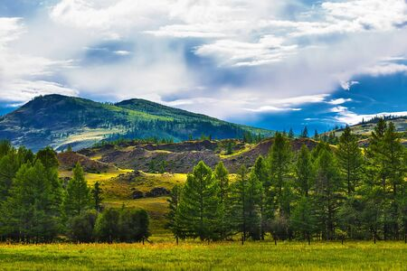 View of the Kurai steppe with larch (lat. Larix sibirica). Gorny Altai, Kosh-Agachsky district, South Siberia, Russia