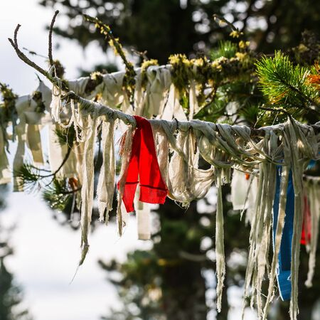 Chui tract, Seminsky pass, Altai Republic, Russia - July 15, 2019: fabric ribbons tied on the branches of Siberian pine Editorial