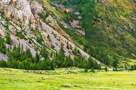 The slopes of the Altai mountains with coniferous trees. Altai Republic, South Siberia, Russia