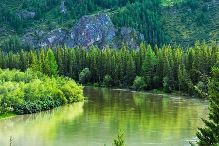 The Chuya river with trees along the banks. Altai Republic, Russia