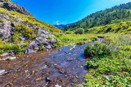 Choba river in summer surrounded by the Altai mountains. Chemalsky district, Altai Republic, southern Siberia, Russia Imagens