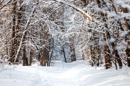 A path through snowdrifts in a snow-covered forest. Western Siberia, Russia