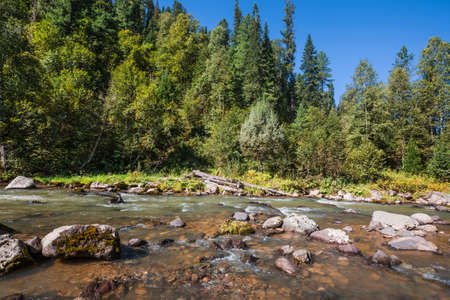 Iogach river with stone rifts surrounded by the Siberian taiga. Turochaksky district, South of Western Siberia, Altai Republic, Russia
