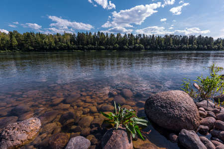 The Biya river is surrounded by the Siberian taiga. Turochaksky district, Altai Republic, South of Western Siberia, Russia