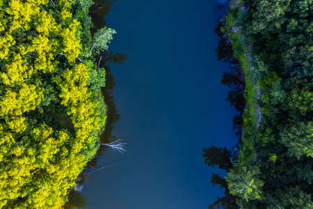 Forest lake in summer from a bird's-eye view. Western Siberia of Russia