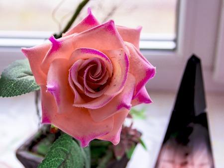 beautiful rose artificion pink.