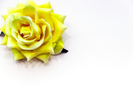 yellow rose button for your designs beautiful