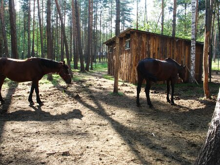 two brown horses at the zoo